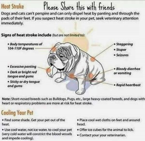 OVER HEATING YOUR BULLIE